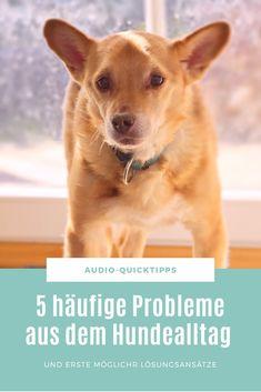In dieser Podcast-Episode widme ich mich 5 häufigen Problemen aus dem Alltag mit Hund und biete dafür erste Lösungsansätze.  #Hundetraining #Hundealltag Chihuahua, Corgi, Animals, Tricks, Swimming, Dog Training Tips, Dog Care, Pooch Workout, Animal Rescue