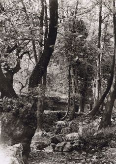 In modern day sits a village nestled in the great woods above Chania called Vrises. A river runs through it and creates a magical scene. Crete Island, Greece Islands, Heraklion, Images And Words, Simple Photo, Crete Greece, Old Maps, Old Photos, Vintage Photos