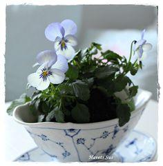 Bing & Grøndahl - flowers - blomster- Havets Sus