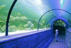 Визит в океанариум – это отличная возможность посмотреть вживую на обитателей крупных водоемов планеты: морских скатов, медуз, рыбок-мыслителей, рыбок-клоунов, осьминога, морских звезд. Также гость может стать свидетелем «Шоу кормления акул» и понаблюдать за кормлением морских жителей в туннеле, который расположен на глубине 2-х метров под водой. Адрес: ул. Малышко, 3 Airplane View