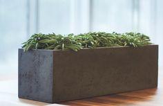 Planter Pots, Outdoor, Room Interior, Decorating, Plants, Nice Asses, Outdoors, Outdoor Games, Outdoor Living