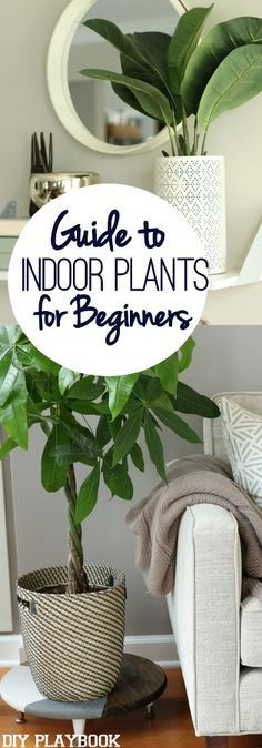 If you have a brown thumb, then this post is for you. Add greenery and indoor plants to your home with our easy guide. Indoor House Plants, Easy House Plants, Indoor Flower Pots, Indoor Flowering Plants, Indoor Gardening, Indoor Plants Succulents, Baskets For Plants, Best Indoor Hanging Plants, Pots For Plants