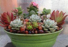 Vida Suculenta: Top 14 Imagens mais vistas, curtidas e compartilhadas na Fanpage do blog no Facebook - Semana X - 10.07.2013 à 17.07.2013