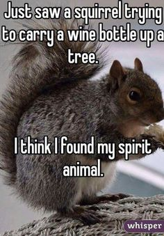 Funny pictures about Squirrel With A Wine Bottle. Oh, and cool pics about Squirrel With A Wine Bottle. Also, Squirrel With A Wine Bottle photos. Funny Animal Pictures, Funny Animals, Cutest Animals, Sports Pictures, Animal Pics, Find My Spirit Animal, Haha, Funny Confessions, Whisper Confessions