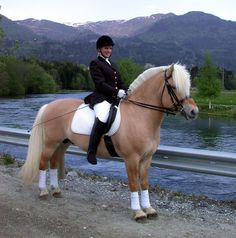 This is a Norweigian Fjord horse. A very old breed with the dorsal stripe down his main and back. They are known to be very calm and quiet, not a very tall horse, generally not much taller than a pony.