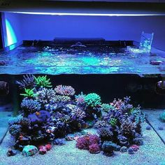 Who's tank still runs with T5? Great reef under T5 by @reefscube #aquaria…