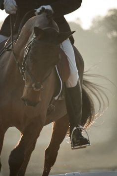 Equestrian - I really miss the unity of horse and rider. Pretty Horses f7d49b7d1d