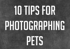 10 Tips for Photographing Pets