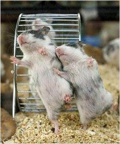 funny photo of hamsters  023
