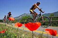 Conoscete le 7 Ciclovie del #Trentino? La pista ciclabile Garda Trentino - Basso Sarca offre scorci paesaggistici sensazionali per un'immersione totale nella #natura incontaminata!   Un'emozione ad ogni pedalata  Se vuoi saperne di più clicca sull'immagine e vai a leggere l'articolo sulle ciclabili del Trentino @gardatrentino  #ciclabilitrentino #rivadelgarda #mountainbike #bike #bicicletta #escursionibike  Ph Credits: ciclabili.provincia.tn