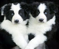 the black and white of it..... too cute too!!!