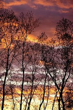 Stunning Sunset with Silhouetted Trees Fine Art Photo. $25.00, via Etsy.