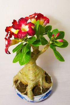 Adenium flower - Yenji Clay Craft's Flower Course student project. Rose Crafts, Flower Crafts, Clay Crafts, Crafts Beautiful, Beautiful Flowers, Desert Rose Plant, Impalas, Common Names, Bonsai Trees