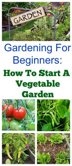 Would you like to have a vegetable garden this year? Here\'s a quick start guide to starting a spring vegetable garden that\'s great for beginners! If you would like more in-depth information about vegetable gardening, be sure to check out my Gardening 101 Series! #BackyardGarden #VegetableGardening101