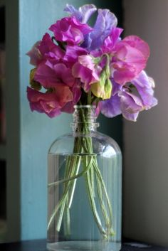 A Growing Obsession Sweet pea