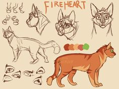 A while ago I was trying to make a design for Fireheart/star that would look well in animation just in case I had to animate him again for a MAP part. The first image is the first concept, the second one is supposed to make him look younger with a...