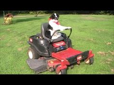 Border Collie DRIVING Zero Turn Lawn Mower BY HERSELF : Video Clips From The Coolest One