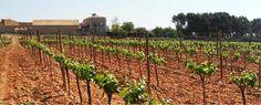 Mustiguillo ~ Meisterliche Bobal-Weine aus Valencia - http://weinblog.belvini.de/mustiguillo-bobal-weine