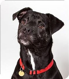 c4617d6d In San Luis and looking for a dog? Meet Agusto. Labrador Retriever Mix,