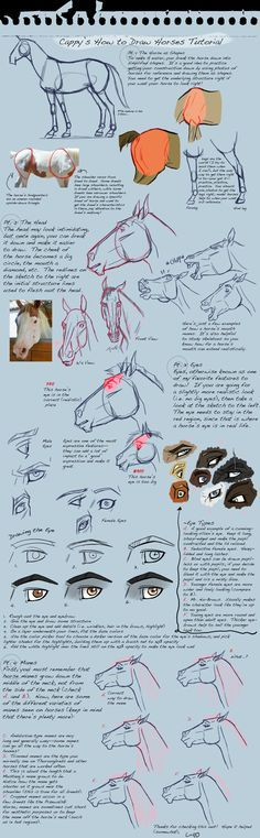 How To Draw Horses Tutorial by Capella336.deviantart.com on @deviantART