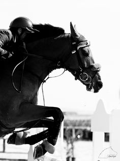 Although I just started jumping, I am soooo excited to move forward! Most Beautiful Animals, Beautiful Horses, White Horses, Dark Horse, Dressage Horses, Jumping Horses, Horse Wallpaper, Show Jumping, Equine Photography