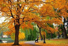 Seasons Of Joy: The Colors Of Fall