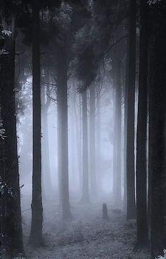 New dark art photography dreams mists ideas Mystical Forest, Fantasy Forest, Forest Art, Dark Fantasy, Fantasy Trees, Foggy Forest, Misty Forest, Dark Forest, Dark Art Photography