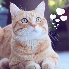 "Muffy & Omnom   en Instagram: ""♡LOVE♡  you 4ever you soo light up my life!! :) """
