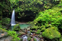 Looking to travel? Don't book any 'ol trip — take part in ecotourism. Here are five gorgeous ecotourism locations to get you started! West Indian, Travel And Tourism, Go Green, Sustainable Living, Places To See, Sustainability, Caribbean, Waterfall, To Go