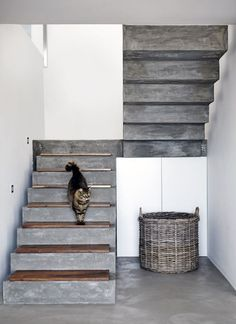 16 Super Cool Concrete Staircase Ideas - - These days, a concrete staircase is really famous for a modern house. The design of staircase with its concrete material is simple and easy to make. It is another option for you who want to design you. Concrete Staircase, Staircase Design, Concrete Floors, Staircase Ideas, Wood Stairs, Stone Stairs, Concrete Houses, Staircase Walls, Concrete Board