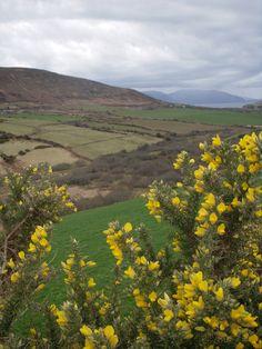a stroll through the Irish countryside