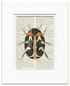 sweet carpet beetle  printed on old page from vintage by FauxKiss