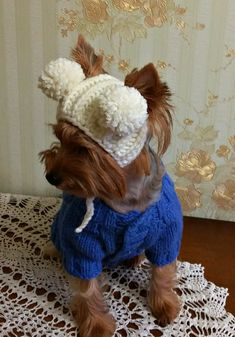 Hey, I found this really awesome Etsy listing at https://www.etsy.com/listing/461723454/dog-hat-knitted-puppy-hat-jumper-mall