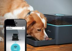 Feed Your Pet From Your iPhone: Pintofeed™ Intelligent Pet Feeder™    ---  from InventorSpot.com --- for the coolest new products and wackiest inventions.