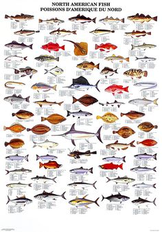 North American Commercial Fish
