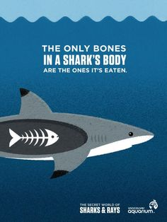 The only bones in a shark's body are the ones it's eaten.