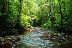 largest and best-protected tropical rain forests in Africa, with percent 90 of their area left undisturbed. Cameroon :)