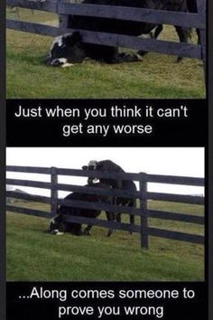 123 Best You Know Youre Having A Bad Day When Images Fanny
