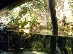 Pier 3: Amazon River Forest
