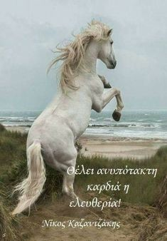 White horses not just in the sea but on the beach Cute Horses, Pretty Horses, Horse Love, Majestic Horse, Majestic Animals, Horse Photos, Horse Pictures, Beautiful Creatures, Animals Beautiful