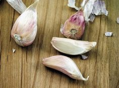 How to Grow Garlic Sprouts ?