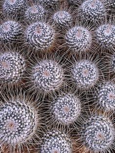 Thornucopiae