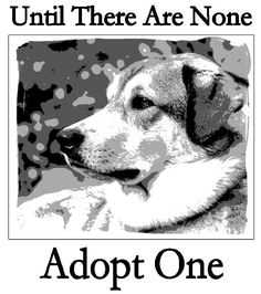 save a life, adopt a pet.  unconditional love!!