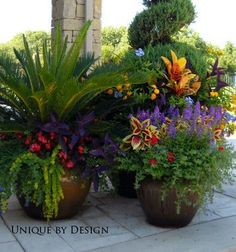 Beautiful container gardening ideas and plant names outdoor flowers, outdoor planters, garden planters, Outdoor Planters, Garden Planters, Outdoor Gardens, Patio Plants, Outdoor Decor, Flower Planters, Plants By The Pool, Outdoor Potted Plants, Small Gardens