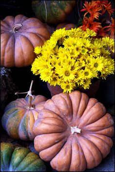 Fairytale pumpkins...heirloom variety