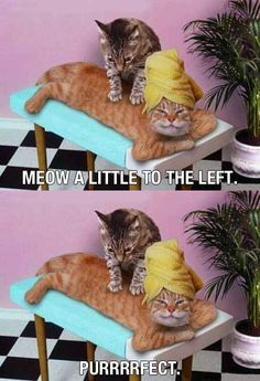 Now that's the life... #Massage #Humor