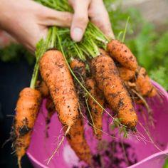 6 New Years Resolutions for the Gardener and Urban Homesteader - Sweet Bee Garden Farm Life, Garden Plants, Carrots, Vegetables, Sweet, Tips, Gardening, Blank Canvas, Resolutions