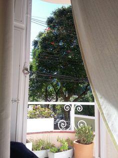 Da janela