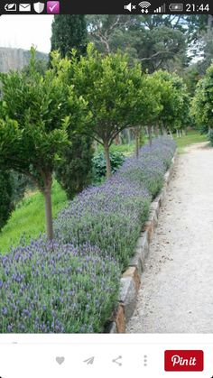 Love lavender borders~ just like my ranch in Patagonia, hoping to grow this beautiful plant at new property
