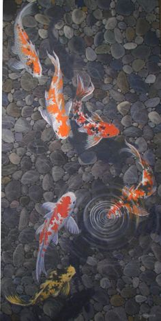 "Koi fish are the domesticated variety of common carp. Actually, the word ""koi"" comes from the Japanese word that means ""carp"". Outdoor koi ponds are relaxing. Koi Fish Pond, Fish Ponds, Coy Fish, Koi Art, Fish Art, Koi Painting, Gold Fish Painting, Japanese Koi, Japanese Dragon"